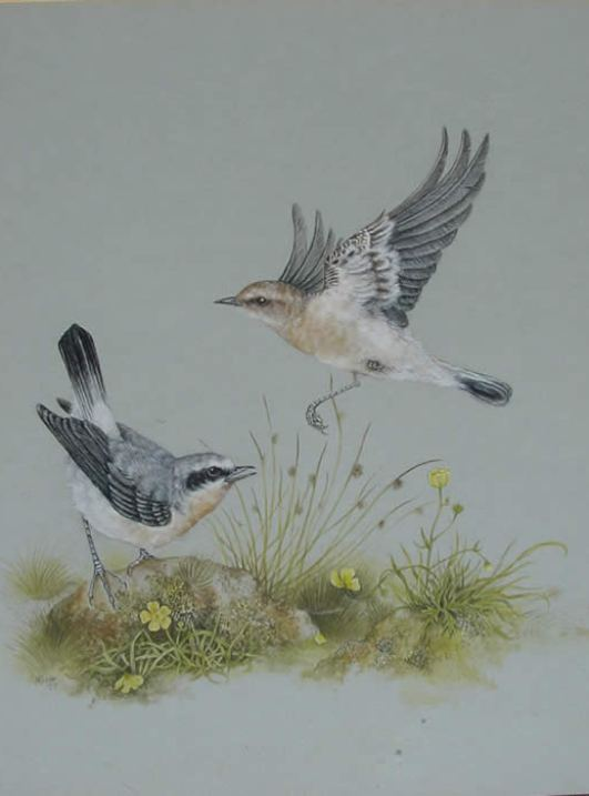 watercolor painting birds