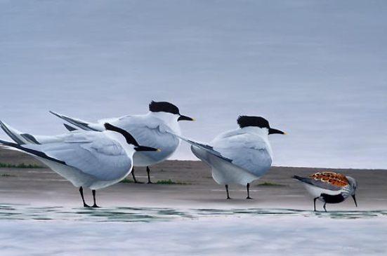 sea-bird-paintings