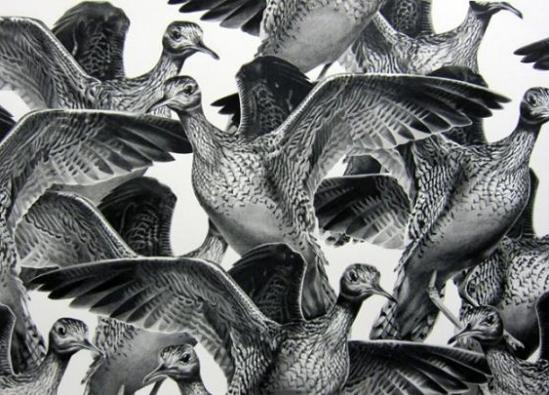 draw-bird