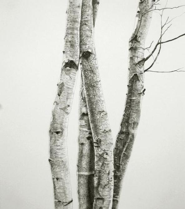 tree-trunk-drawings