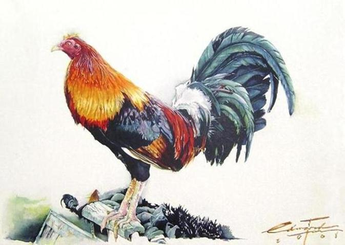Amazing Rooster Watercolor Paintings