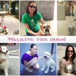 Doggie Love – How one woman changed her life (and health!) for the love of dogs