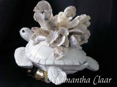 Oyster Crowned Sea Turtle