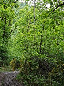 descent to Livinhac