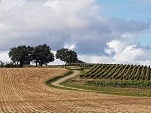 fields4