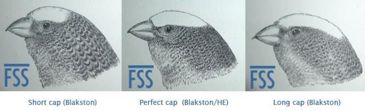 Clear cap variations-fss