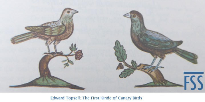 Topsell First Kinde of Canary Birds-fss