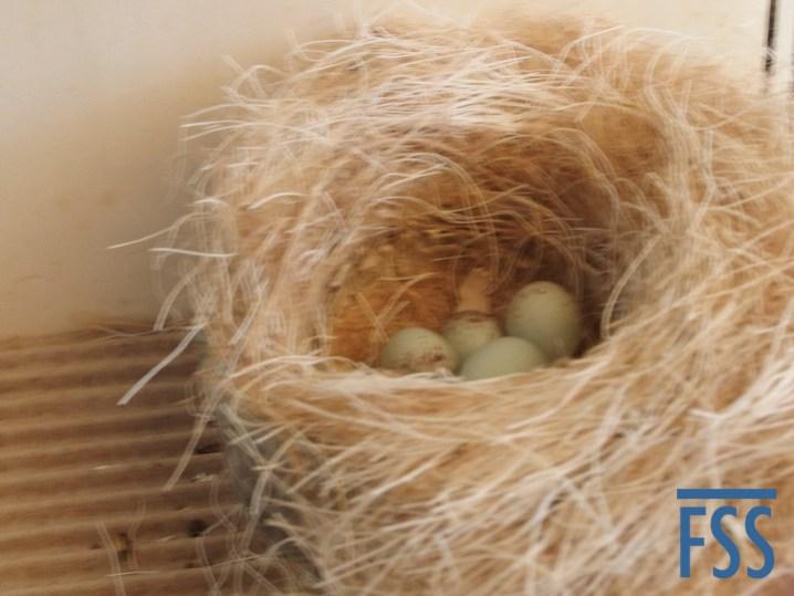 Floor nest with eggs