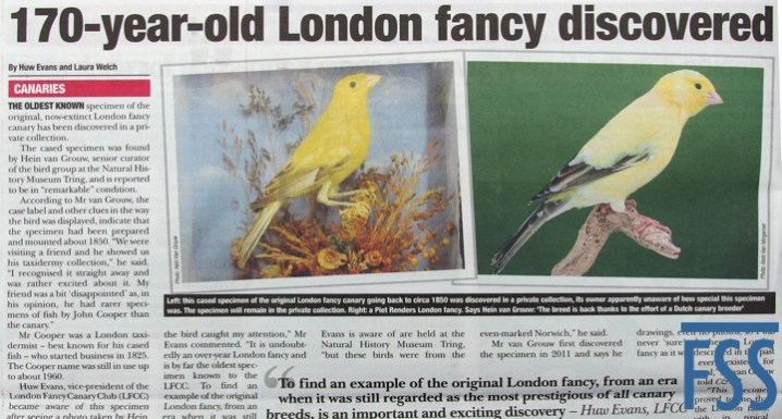 London Fancy canary circa 1850