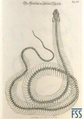 Johann Daniel Meyer grass snake