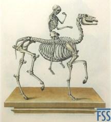 Johann Daniel Meyer horseman