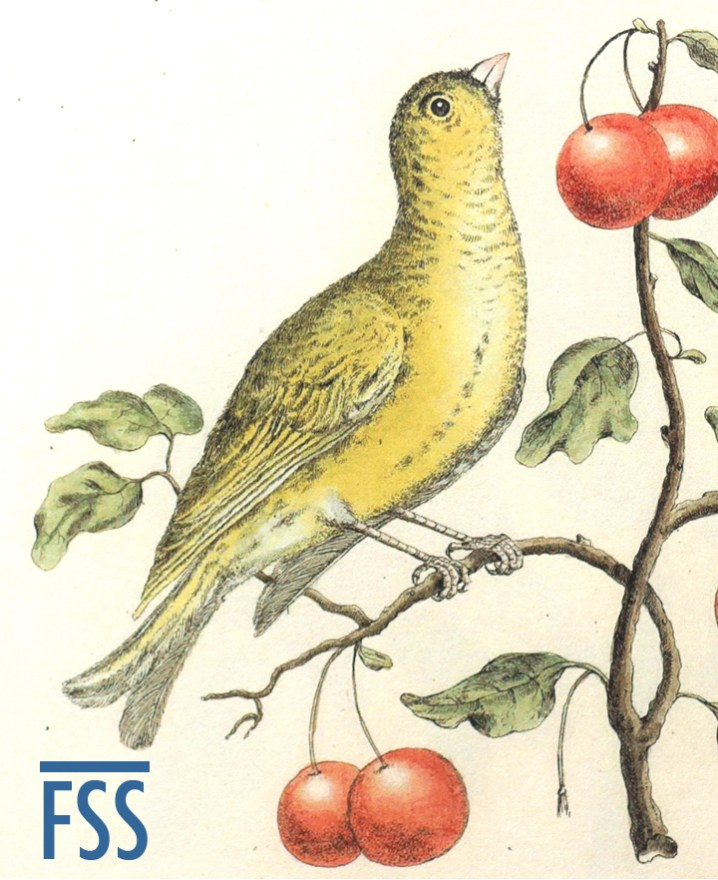 Johann Daniel Meyer canary