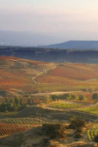 Spanish Rioja