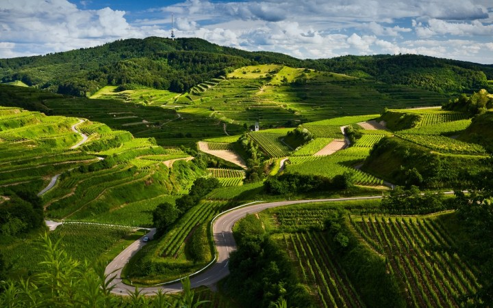German wine thrives from the colder climates
