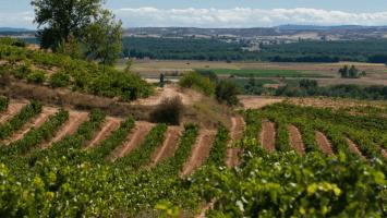 Spanish vineyards