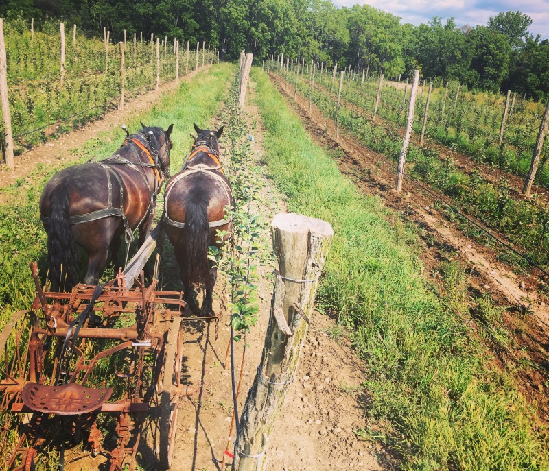 Good Life Farm: Tour and Skill share: Horse & Teamster Orchard Work. Saturday, 4-6pm on 8/25/18