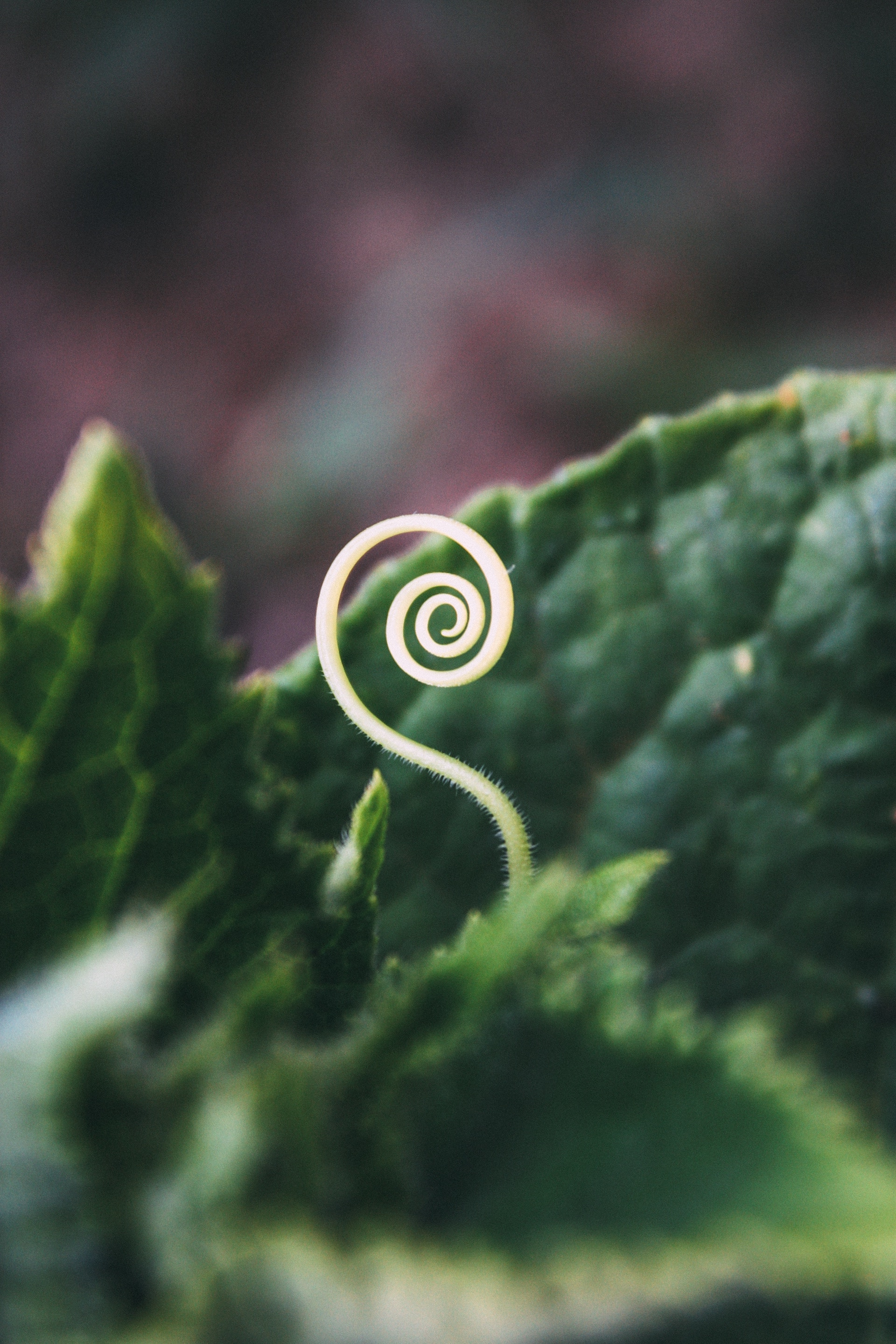 tendril-bogomil-mihaylov-519199-unsplash