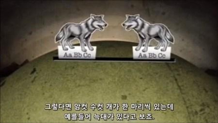 늑대가 개가 되는 것이 진화가 아닌 이유 - 소진화를 설명하는 비유