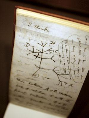 다윈이 그린 생명 나무
