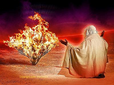 떨기나무에 불이 붙어 있는 것을 본 모세
