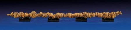세계에서 가장 긴 똥 화석