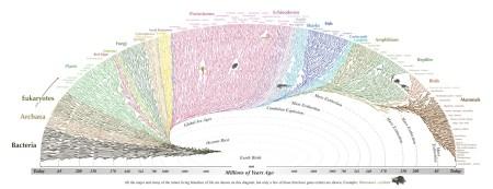 진화론 - 생명 나무