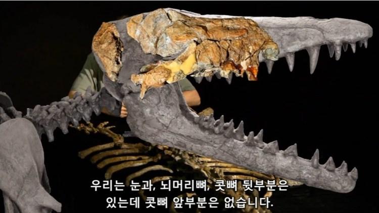 한스 테위슨 - 분수공이 있다는 콧뼈 앞부분은 없습니다