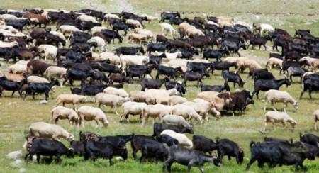 마태 복음 25장 양과 염소