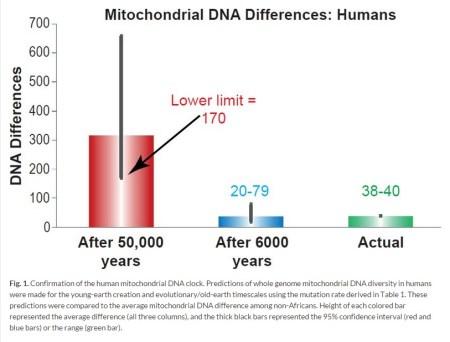 MtDNA 변이 차이 2015 인간 - 젊은 지구 창조론