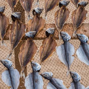Fish dry