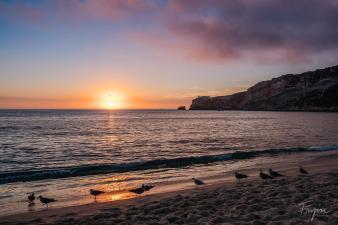beach nazare sunset sea gulls