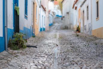 Alley Santiago do Cachem Cat Sunset