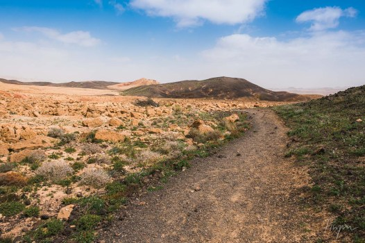 A dusty path through the Makhtesh Ramon with a blue sky and green shrubs