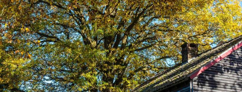 fall-home-tree-leaves