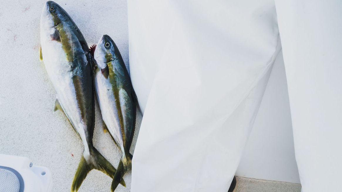 best lures for Skipjack Tuna