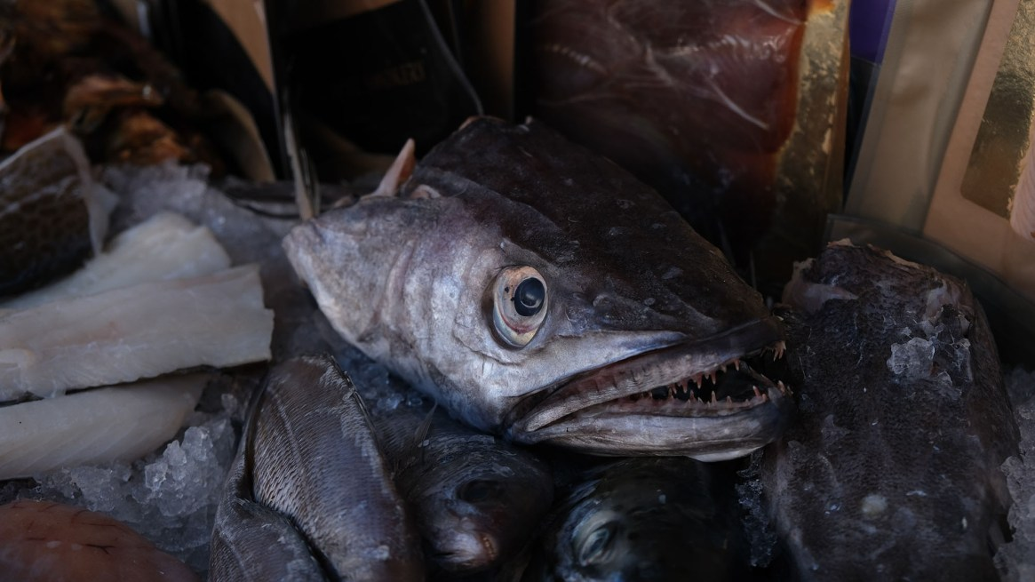 is Queenfish good to eat