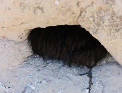 ¿Qué animal estará durmiendo ahí dentro?