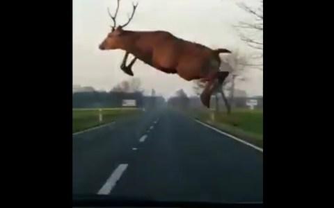 ¿Para qué saltas delante de los coches?