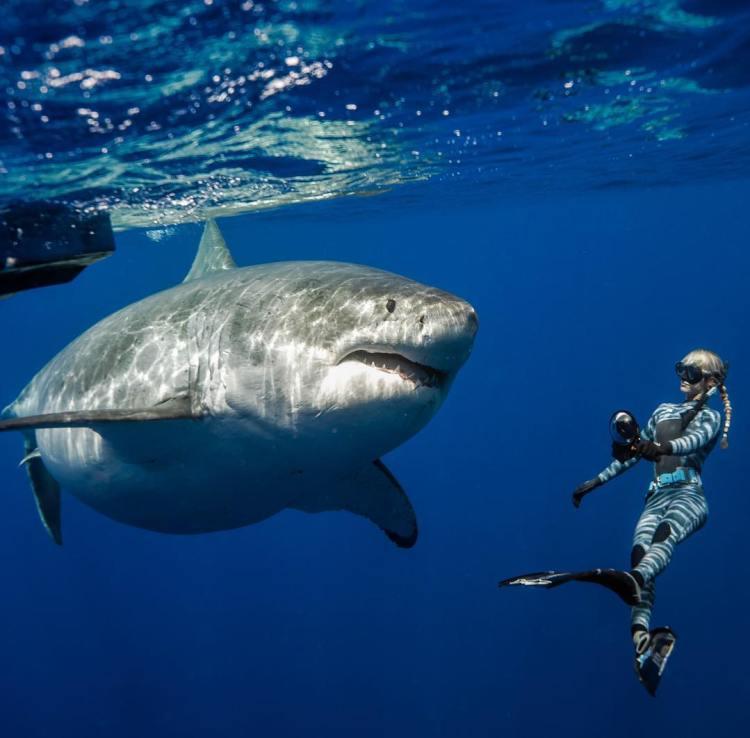 Nadando junto al tiburón más tocho del planeta