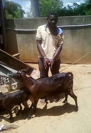 Un hombre acusado de vioIar a una cabra dice que le pidió permiso primero