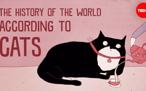 La historia del mundo vista desde la perspectiva de los gatos