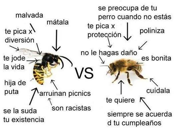 Cómo tratar a avispas y abejas