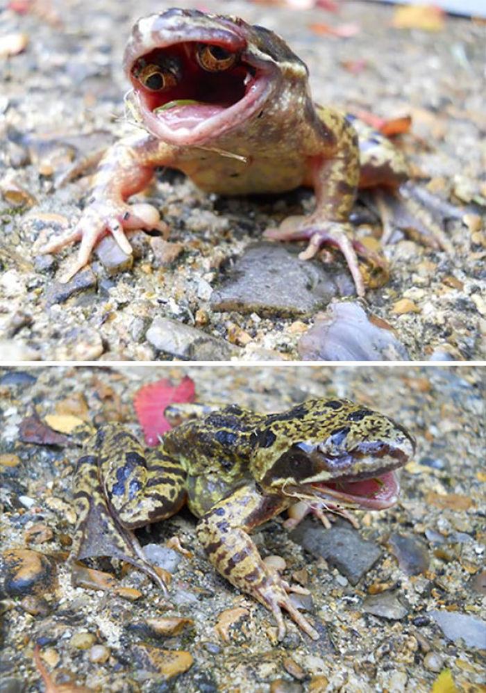 Fotos de cuando la naturaleza nos hizo decir NOPE [26 fotos]
