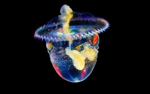 ¿Cómo es el plancton de cerca?