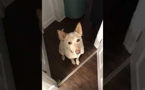 Creo que este perro me quiere decir algo