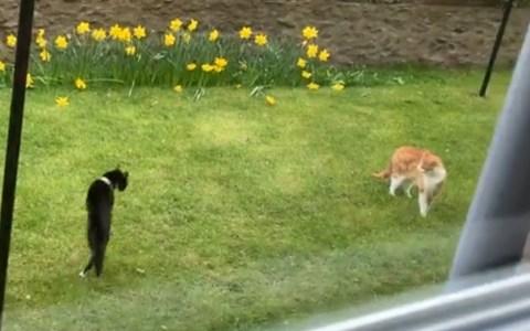 """""""Mira, la gata pelirroja que te gusta, actúa normal"""""""