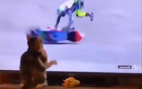 La fuerza es poderosa en este gato