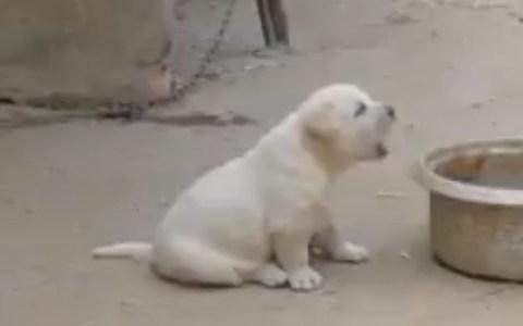 Los perros también pueden saber otros idiomas