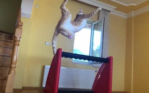 Os presento a Catsillas, el gato portero