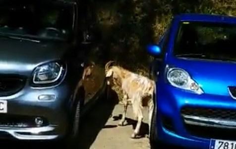 Tened mucho cuidado cuando lavéis el coche de no sacarle mucho brillo, que hay muchos cabrones sueltos.....